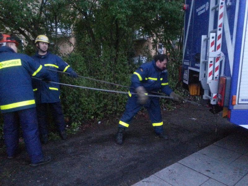 Mittels Seilwinde des GKW wurde der entwurzelte Baum von dem anderen Baum heruntergezogen.