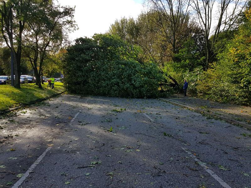 An der Jahnbrücke blockierte ein Baum alle drei Fahrstreifen.