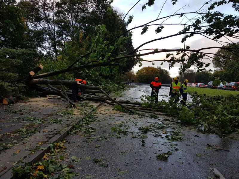 Umgestürzte Bäume wurden zerkleinert.