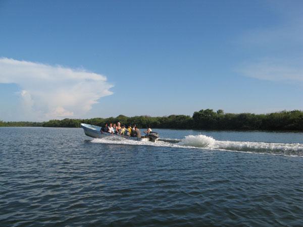 Bootsfahrt durch die Mangroven.