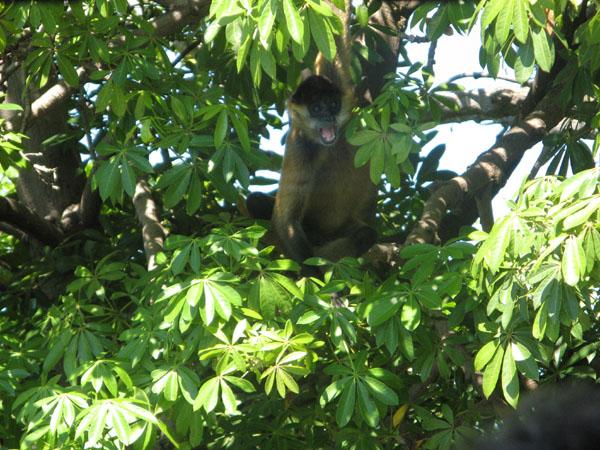 Affen bei Bootstour über den Granadasee.