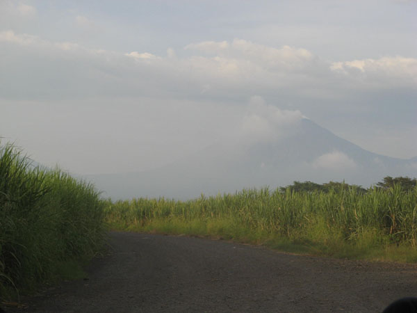 Fahrt durch die Zuckerrohrplantage.