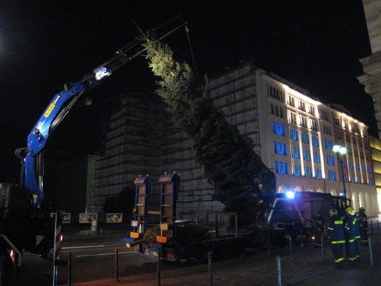 Der Baum wird angehoben.