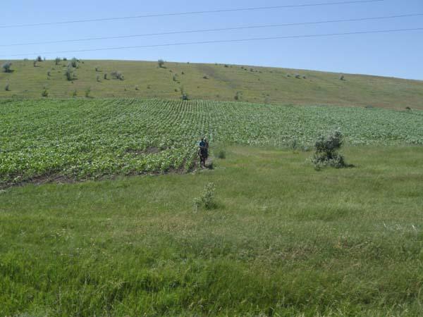Unterwegs nach Carpineni. Die Landbevölkerung lebt von Landwirtschaft. Feldarbeit wird hier mit Pferden oder per Hand erledigt. Maschinen sieht man sehr selten.