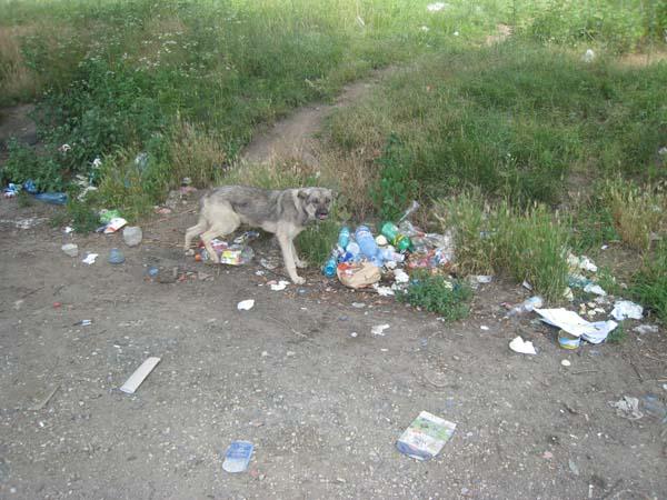 """Typischer """"Rastplatz"""" in Rumänien mit Müll und hungrigem Straßenhund."""