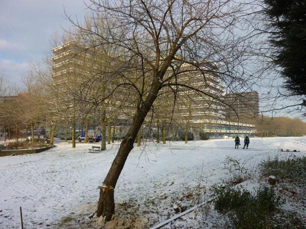 Das Gartenbauamt Hamburg-Nord hatte für diese Ausbildungszwecke 5 Bäume in verschiedenen Stammdicken zur Verfügung gestellt.