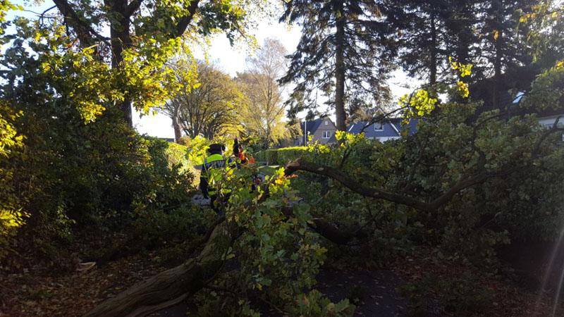 Im Ellerbrookswisch hatte sich durch den Sturm der Stamm einer 9m-Eiche auf ca. 4m Länge gespalten und drohte auf ein anliegendes Haus zu fallen.