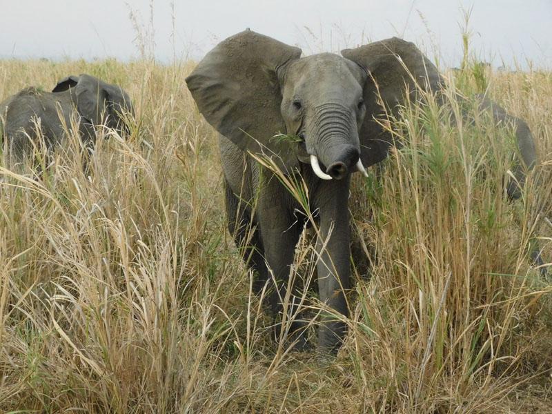 Auf Safari.